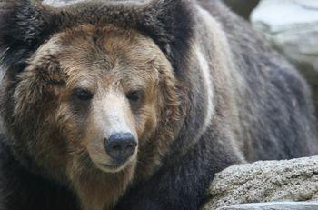 熊に遭遇したら、後姿を見せないようにしながら距離をとること