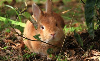 飼っていたウサギを手放してしまった…